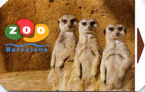 Fotos encadenades - Página 4 Zoo_Barcelona_suricatas